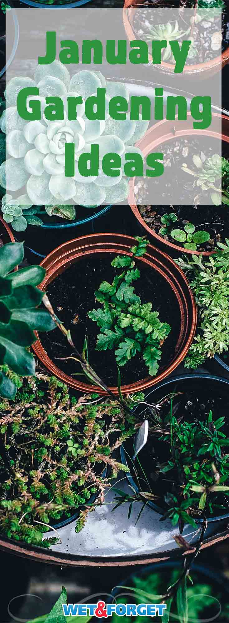 January marks a new year of gardening! Read about the best ways to get a jump start on your spring gardening this month!