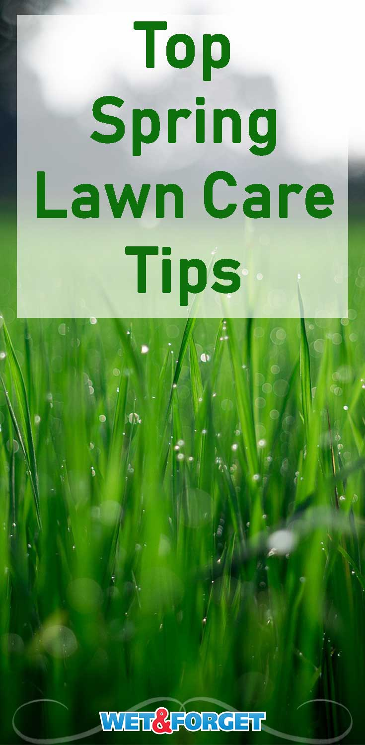 Use these 5 tips to keep your lawn looking great this spring!