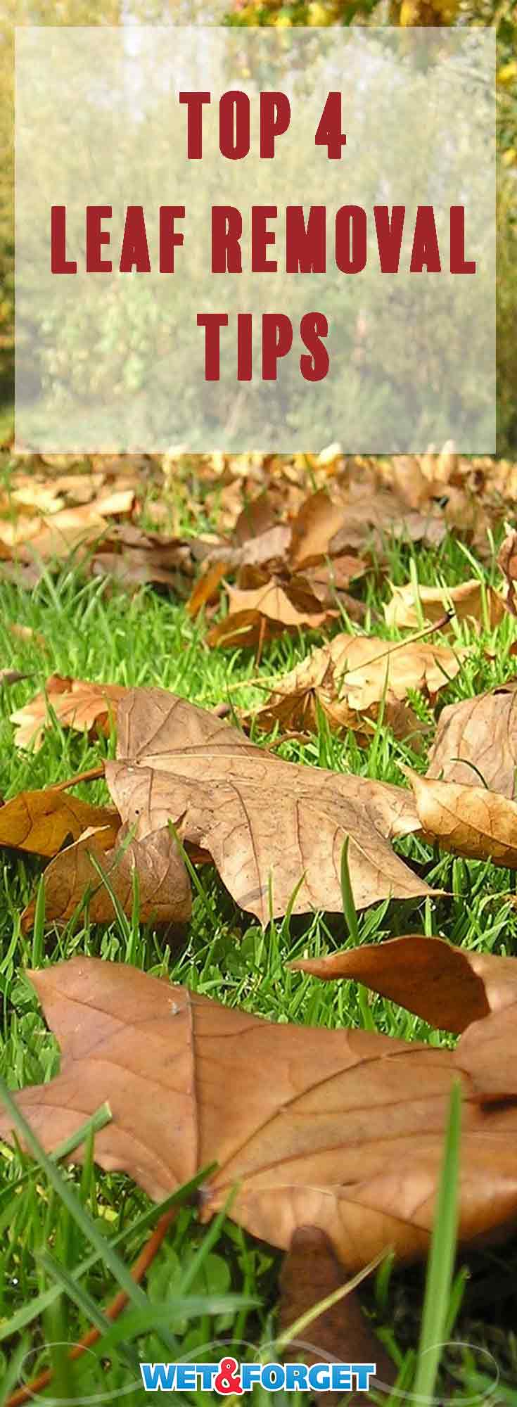 Fall leaves can quickly take over your front yard and cause mold or mildew to grow. Use these top tips to make your fall clean up that much easier!