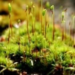 Make Moss History this Spring with Wet & Forget Outdoor. No Scrubbing!