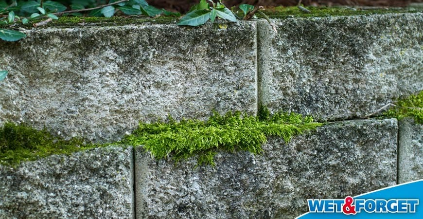 4 Places Where Wet U0026 Forget Outdoor Makes Removing Moss Easy As Pie