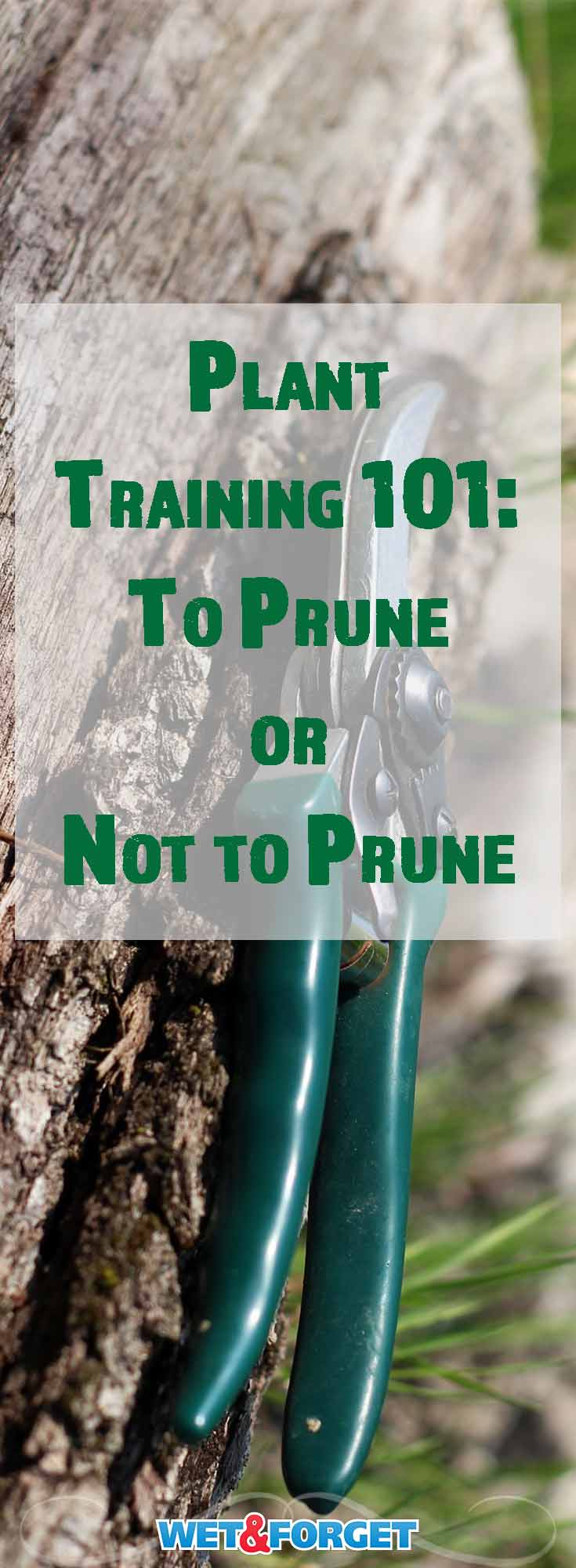 Some plants in your garden grow the best with a little bit of help from your pruning shears. Whereas others do much better if you leave the pruners in the shed. Some plants are more vulnerable than others as well. Here's a guide on how to prune and when to prune, to help give your plants a long, healthy life.