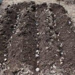 6 Delicious Reasons You Should Definitely Plant Potatoes this Spring