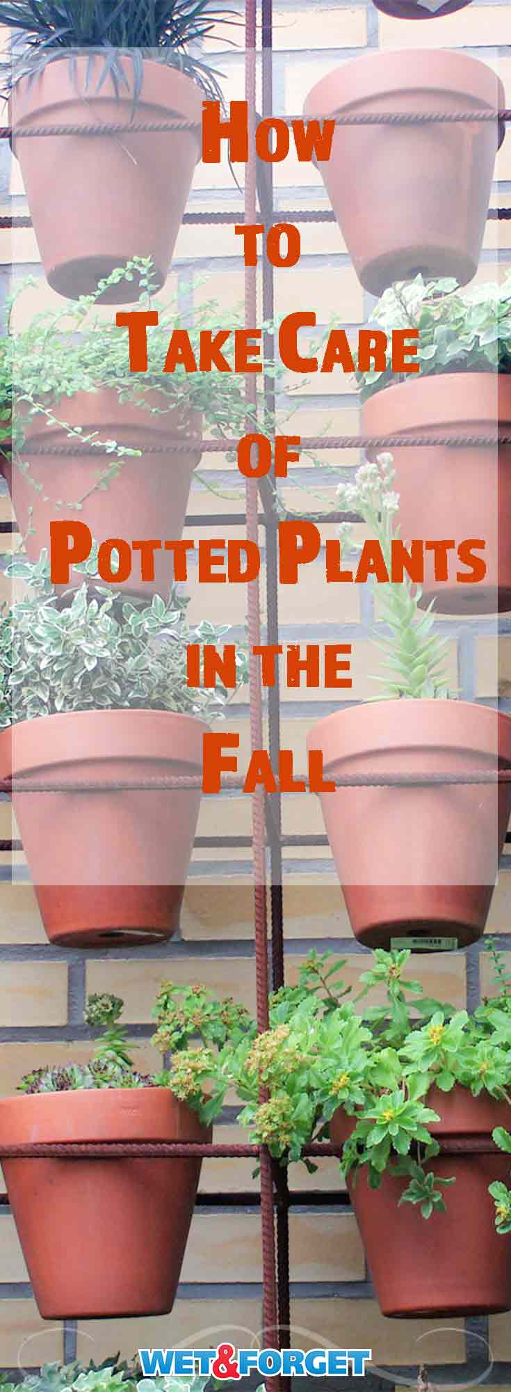 Fall is officially here as temperatures start to cool. Make sure you take care of your outdoor potted plants with our guidelines this fall!
