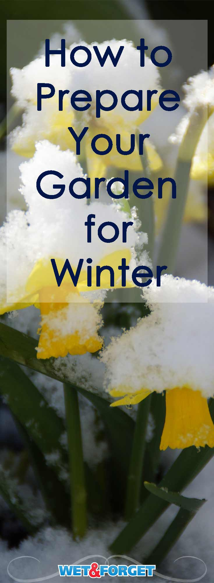 Prepare your garden for the cold winter weather with these 5 steps!