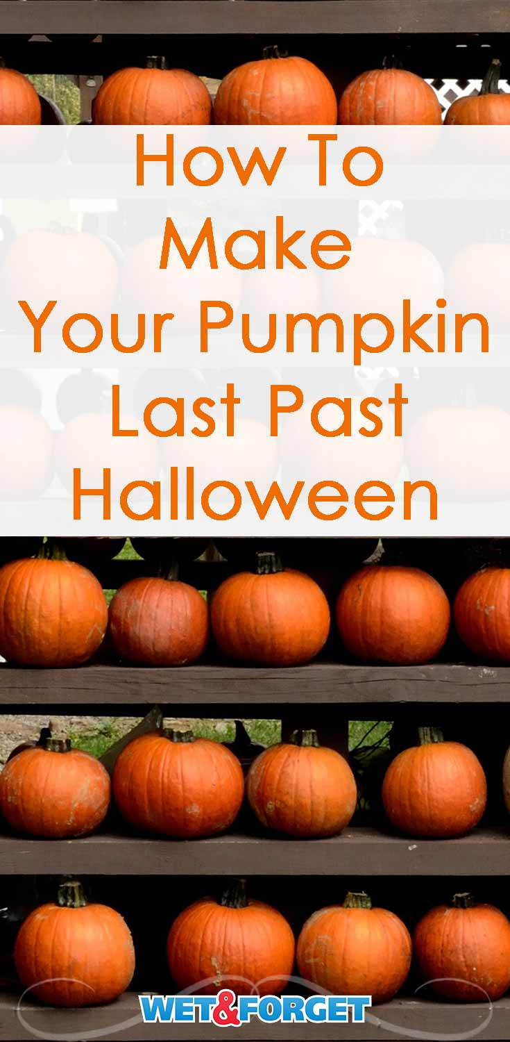 Did your pumpkin start to rot a few days after carving last year? Learn how to preserve your pumpkin to make it last for 2 weeks or more!