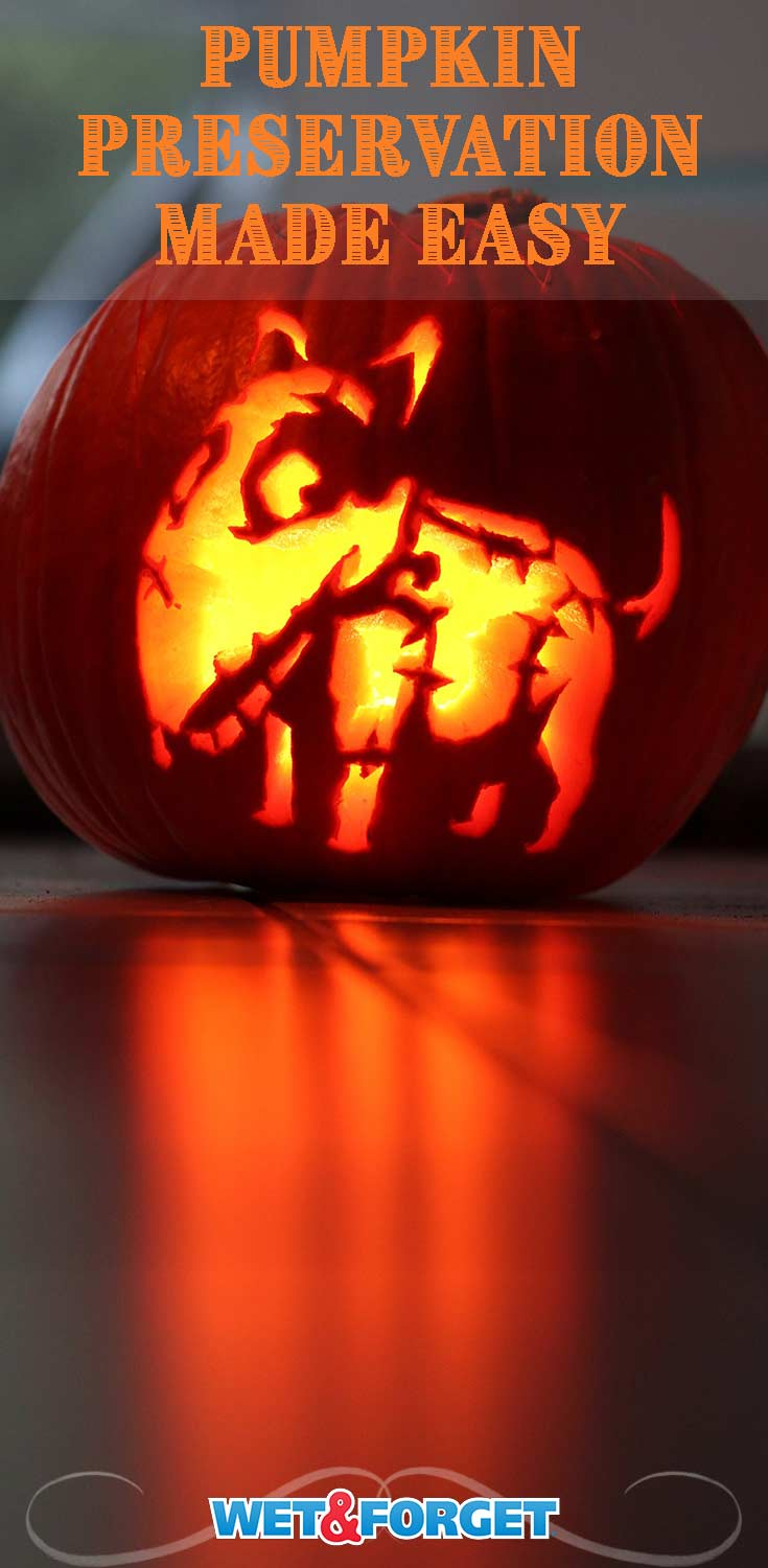 Follow these simple steps to make your carved pumpkin last weeks this October!