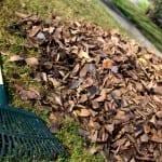 The 4 Target Zones for Your Lawn and Garden Fall Cleanup