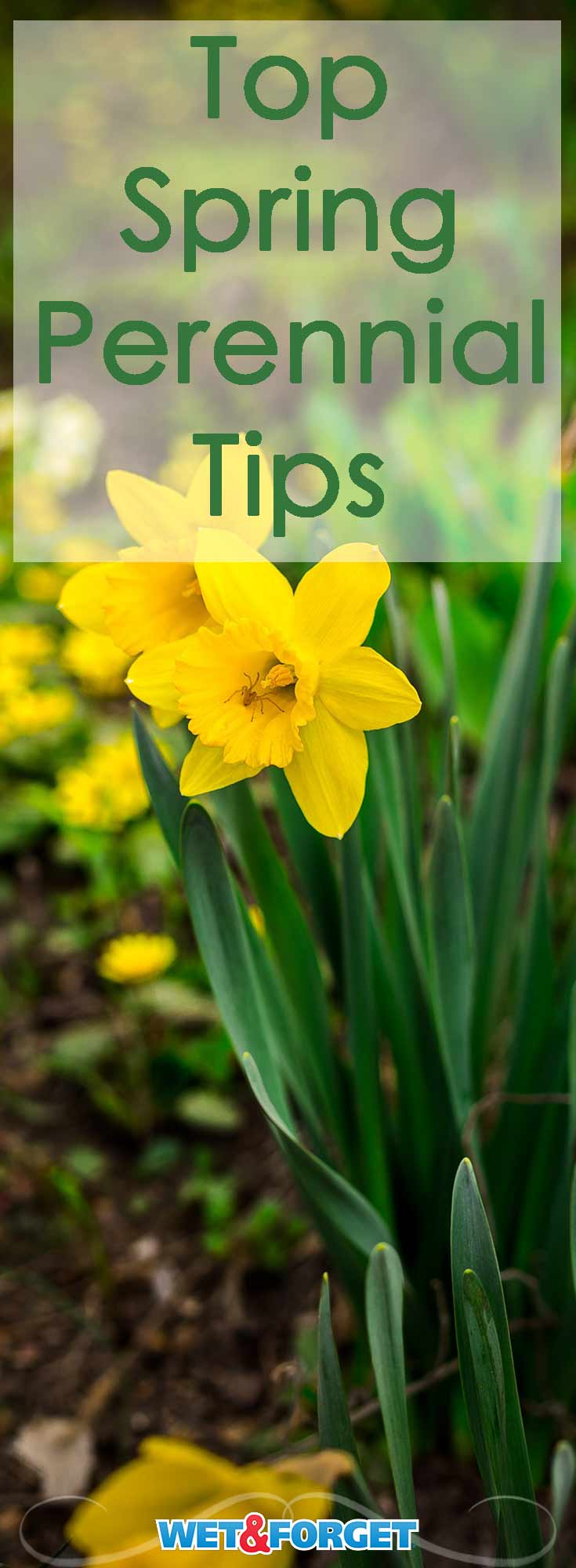 Springtime is just around the corner! Read up on these top tips to make sure your perennials grow bountiful blooms.