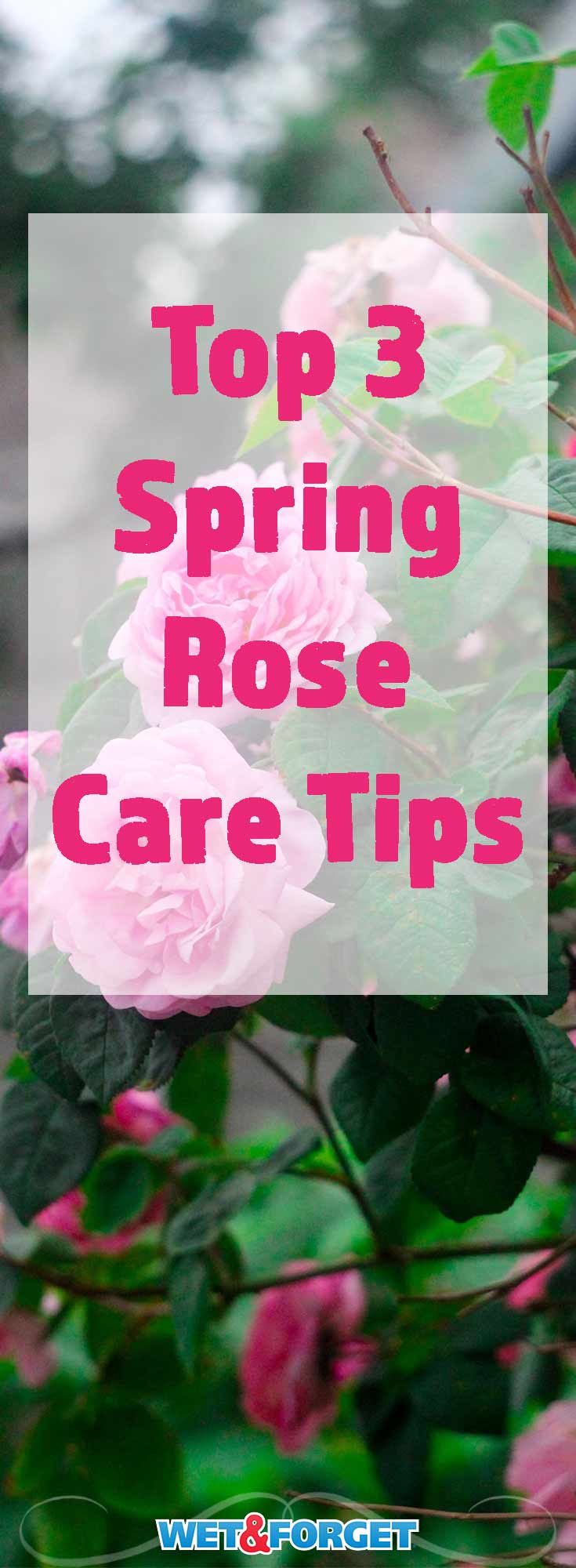 Roses come in many different varieties and need different care to keep them at their best. Read up on the top spring rose care tips!