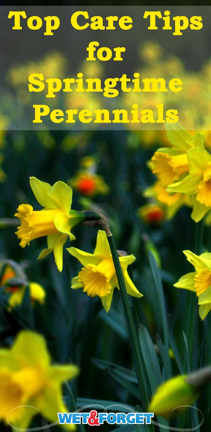 Keep your spring perennials in good shape with our top care tips!