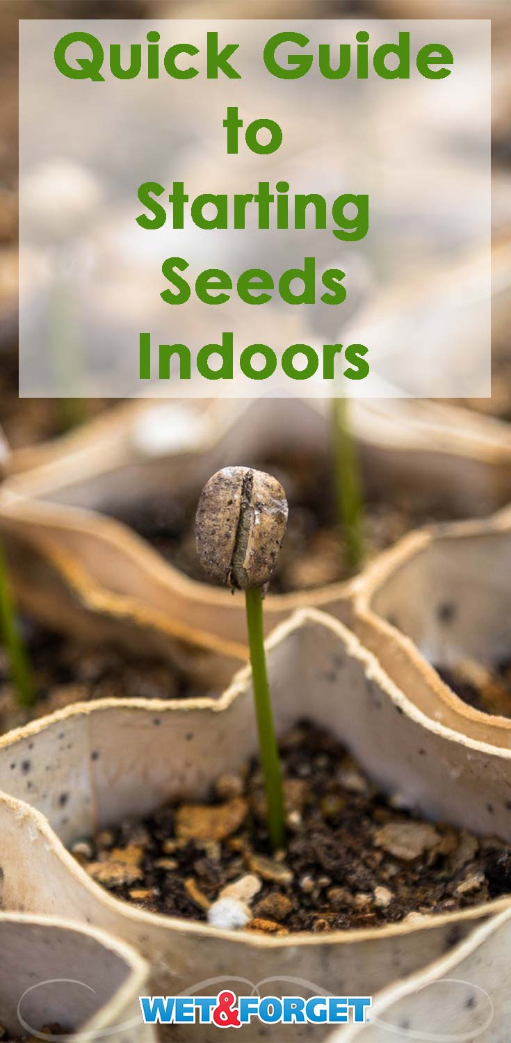 Prepare for spring by starting your seeds indoors! Learn which seeds are most suitable to grow indoors with our guide!