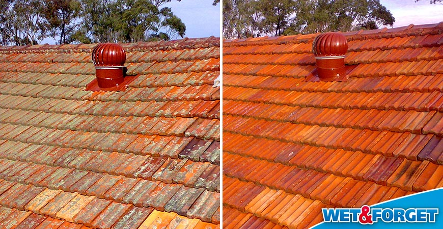 remove roof lichen