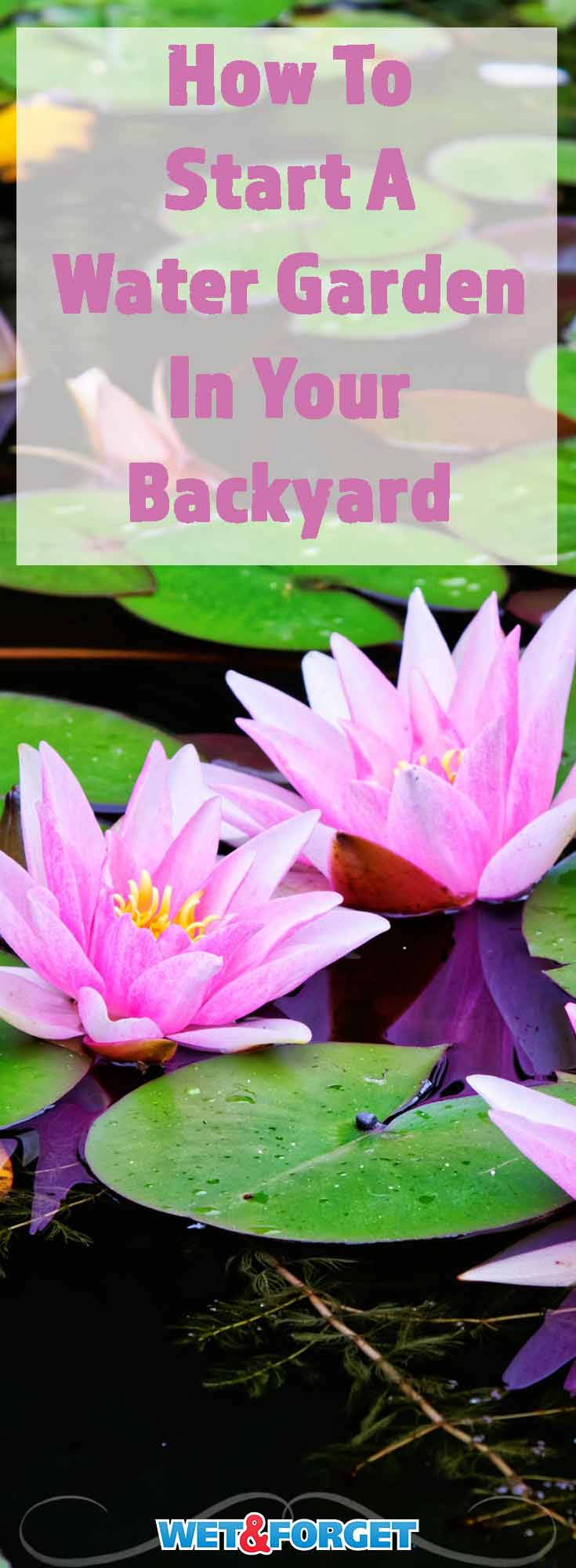 Water gardens can add so much beauty to your backyard. Learn how to start a water garden in your backyard with these 5 steps!