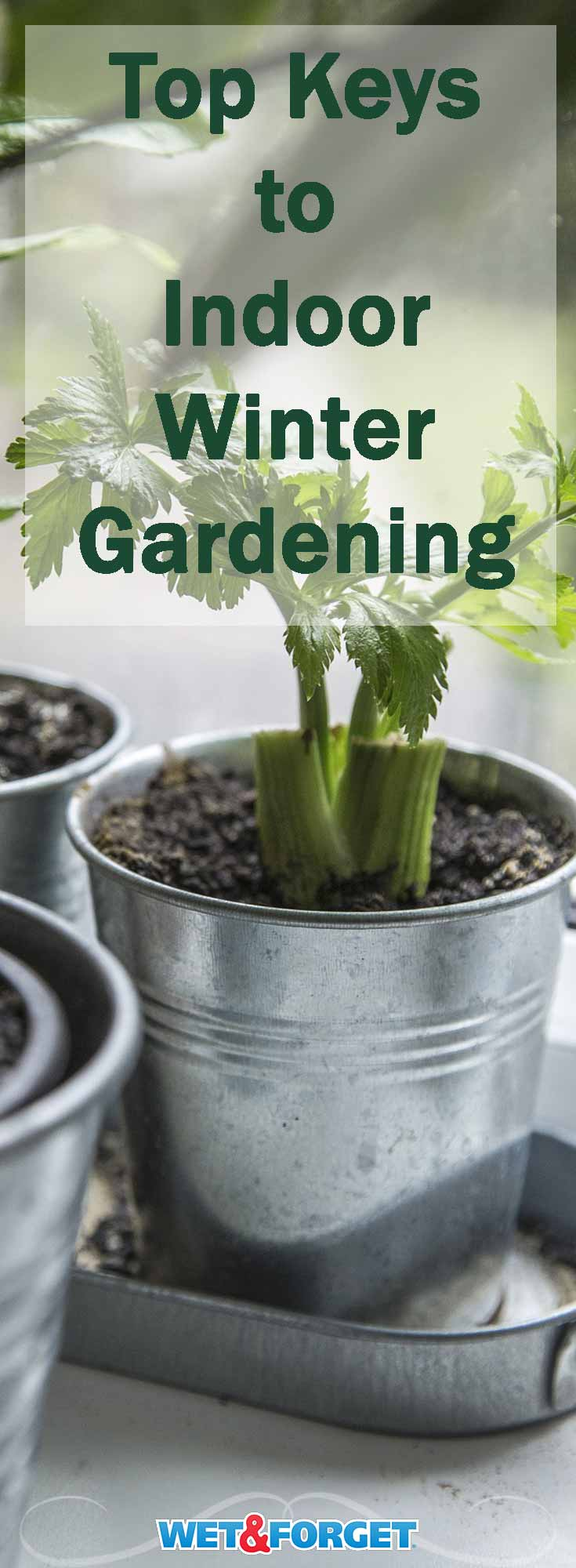 The cool weather has finally hit, but that doesn't mean you have to stop gardening! Follow these keys to keep your indoor garden healthy and strong throughout the season.