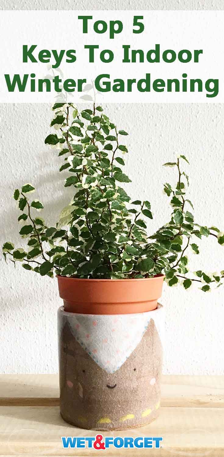 Work your green thumb this winter with these 5 essential keys to indoor winter gardening!