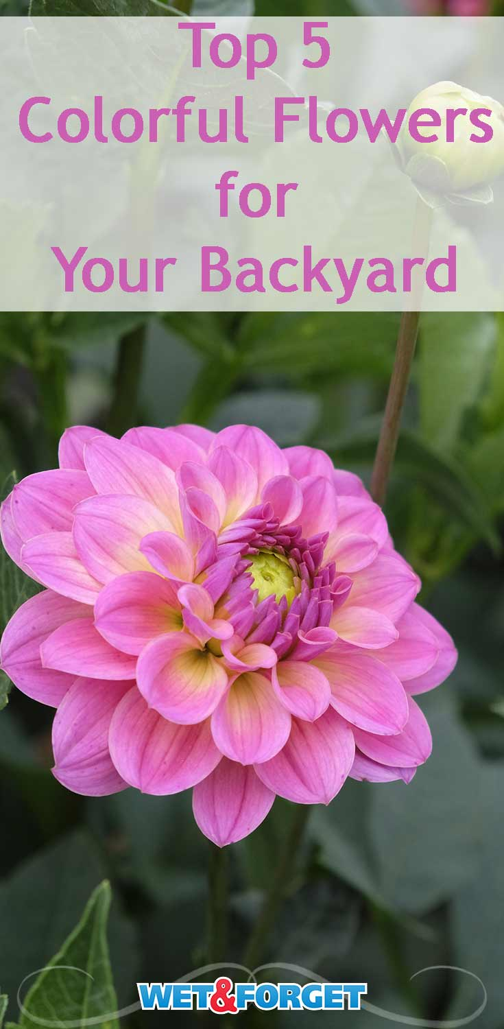 Your garden is sure to be noticed by your neighbors by adding these 5 colorful blooms!