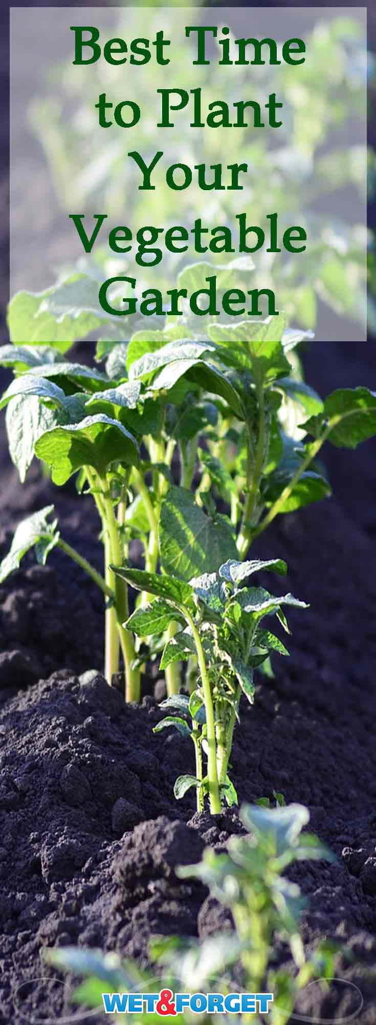 Many Vegetables Require Different Weather For Planting. Find Out When The Best  Time Is To