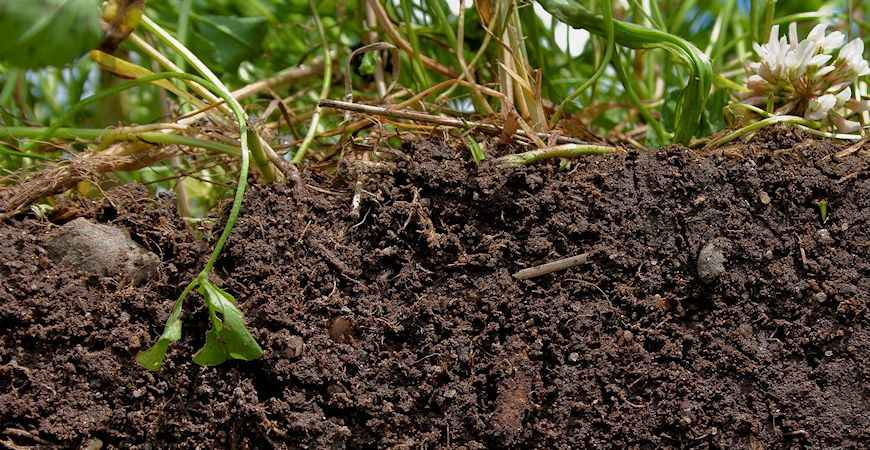 Image Result For How To Start A Garden With Bad Soil