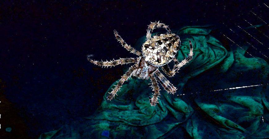 spider dark_c_r