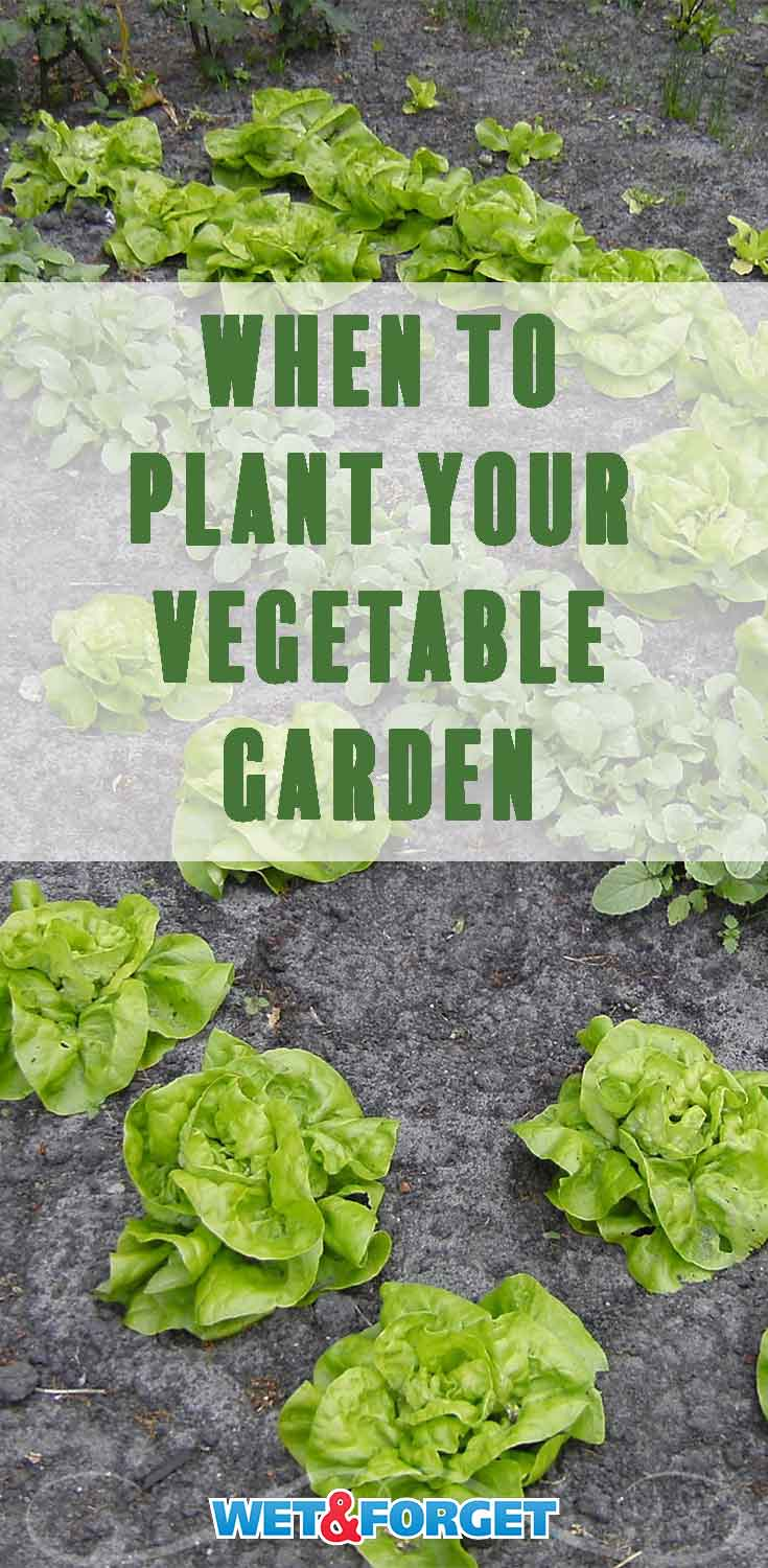 Discover the best time to plant your vegetable garden with our quick guide!