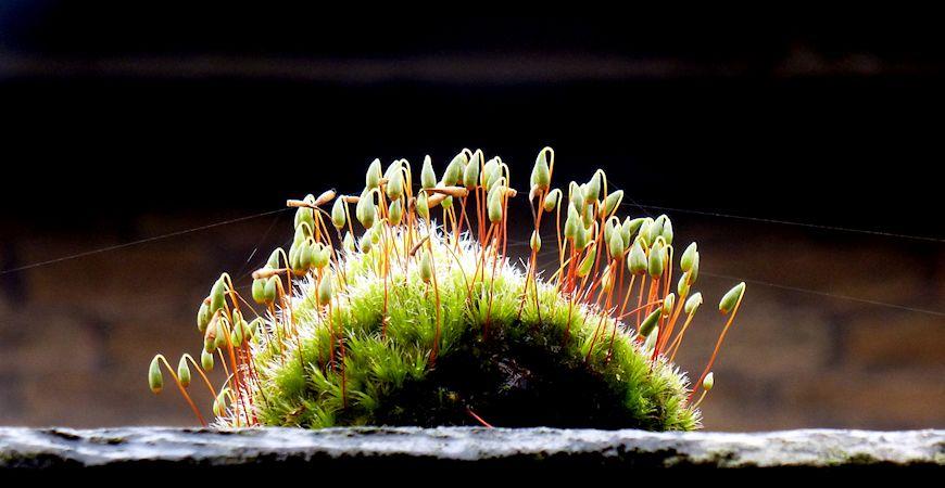 decorative moss