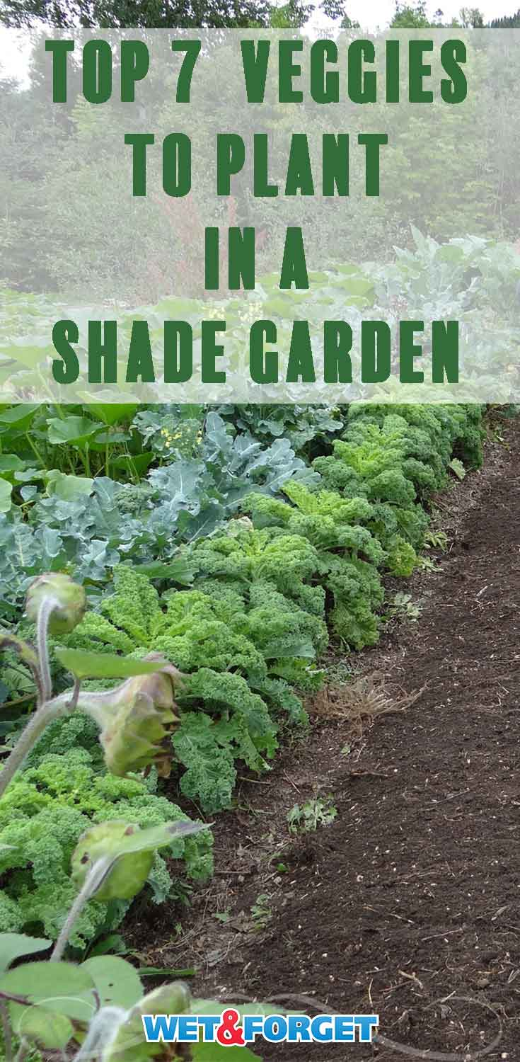 Discover which veggies thrive in a shade garden with our handy guide!