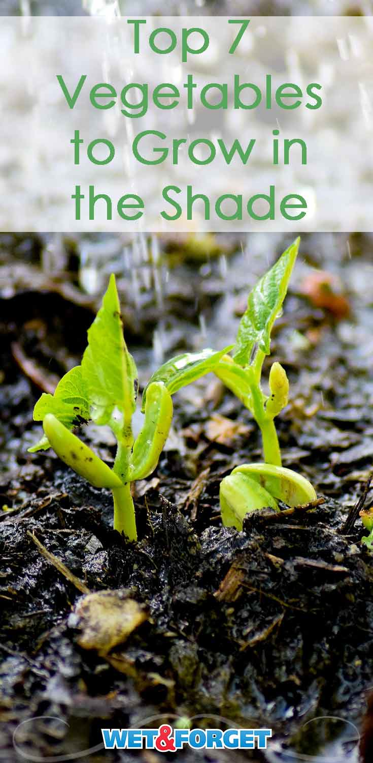 Find out which vegetables thrive in the shade and plan your new garden!