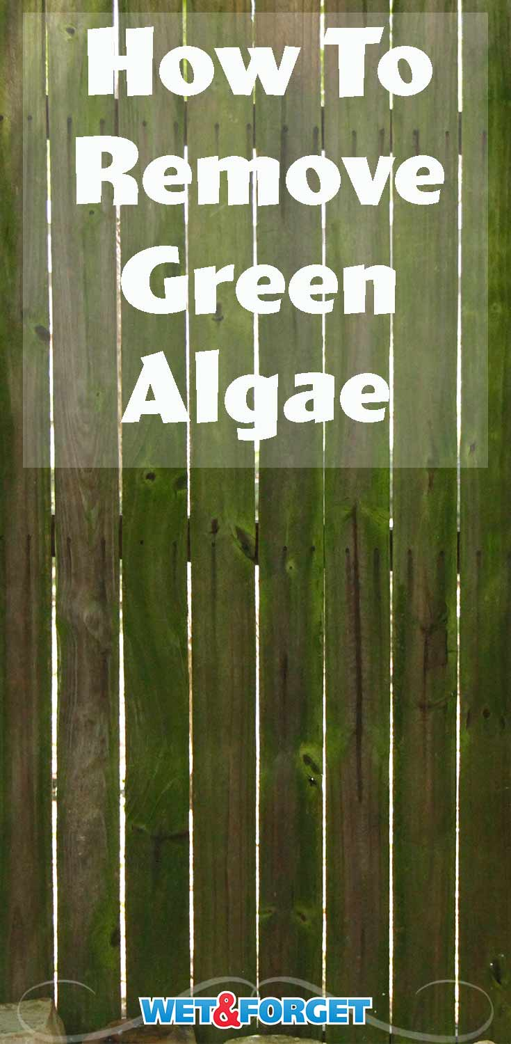 Don't let algae growths linger on your outdoor surfaces! Clean it up without bleach or scrubbing using this easy method!