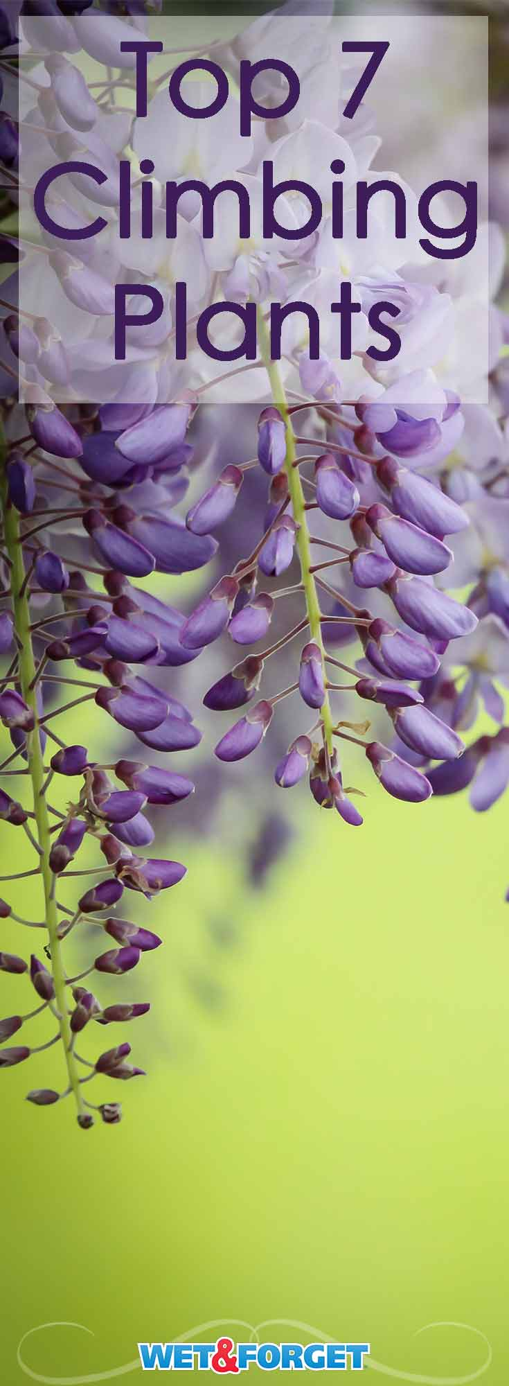 These gorgeous climbing plants are sure to brighten your garden! Discover which climbing plant suits your backyard best.