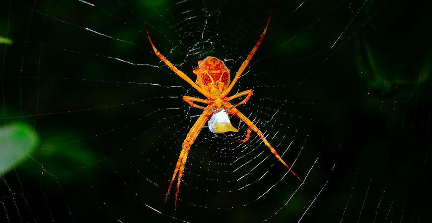best spider killer