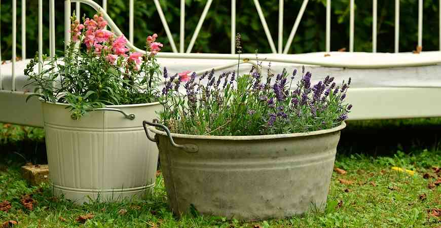 best container plants