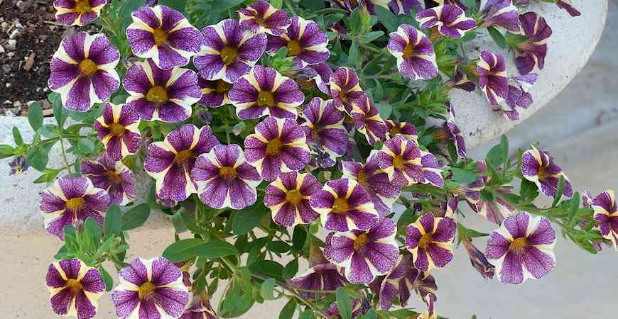 best flowers to grow