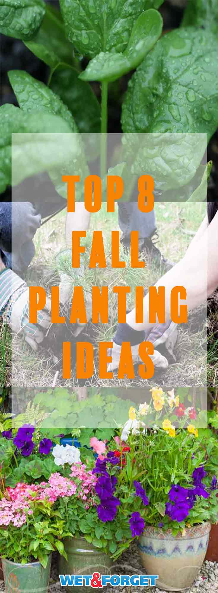 There are many plants that are ideal to plant in the fall. Boost your garden this fall with these planting ideas!