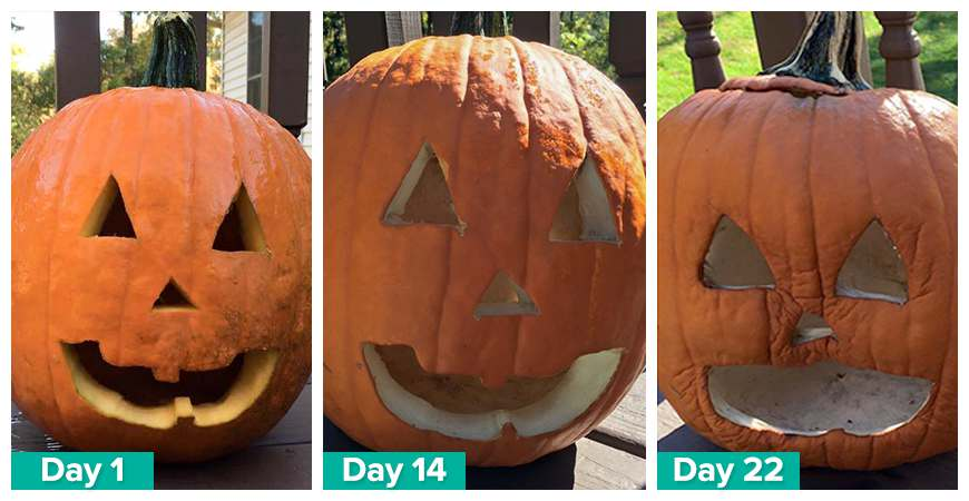 longer lasting pumpkins