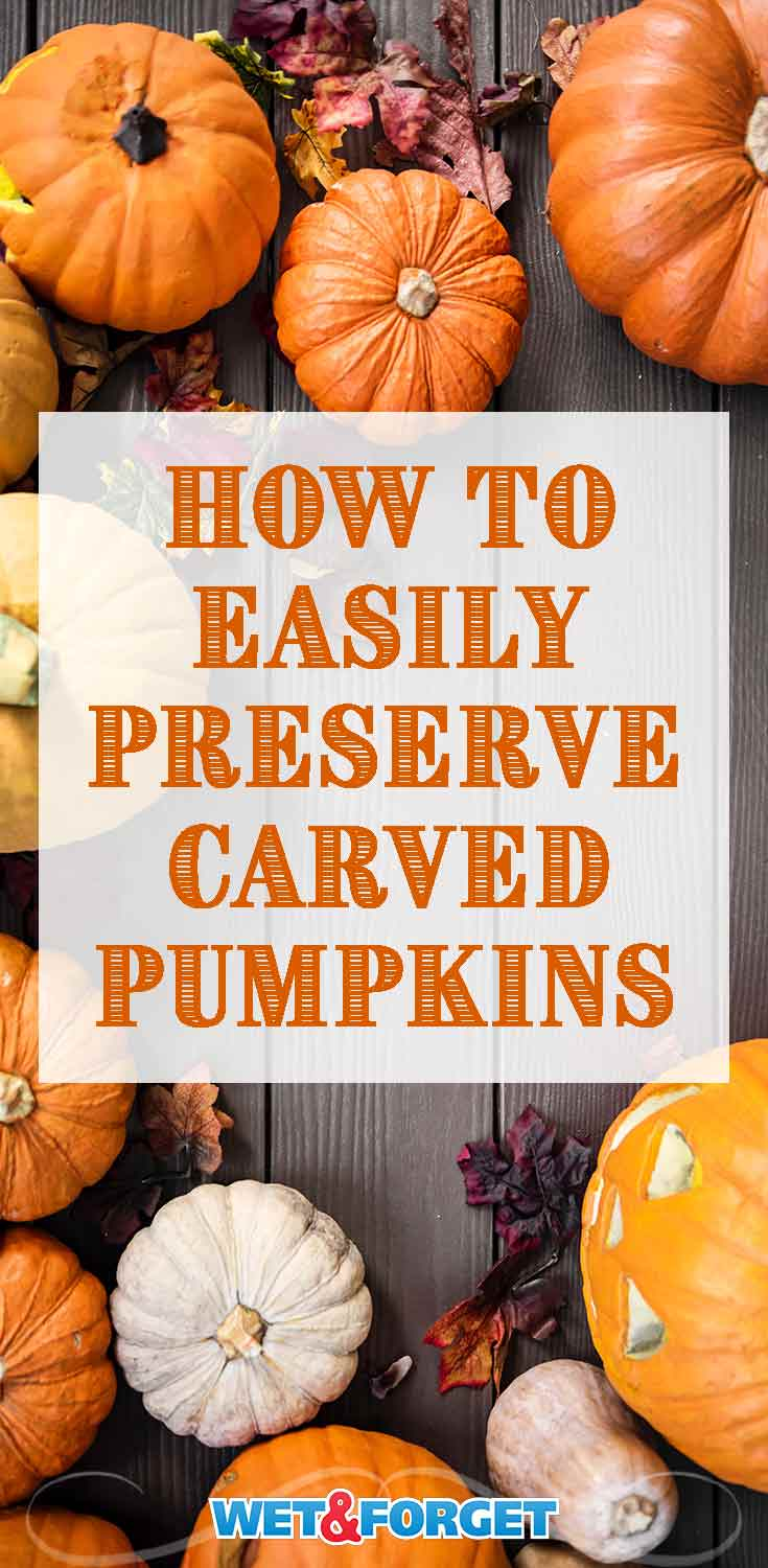 Learn how to make your carved pumpkins last a few weeks with this easy preservation method!