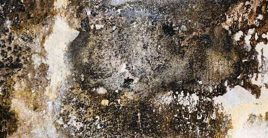 Ask Wet Amp Forget 6 Ways Indoor Mold Can Harm Your Health