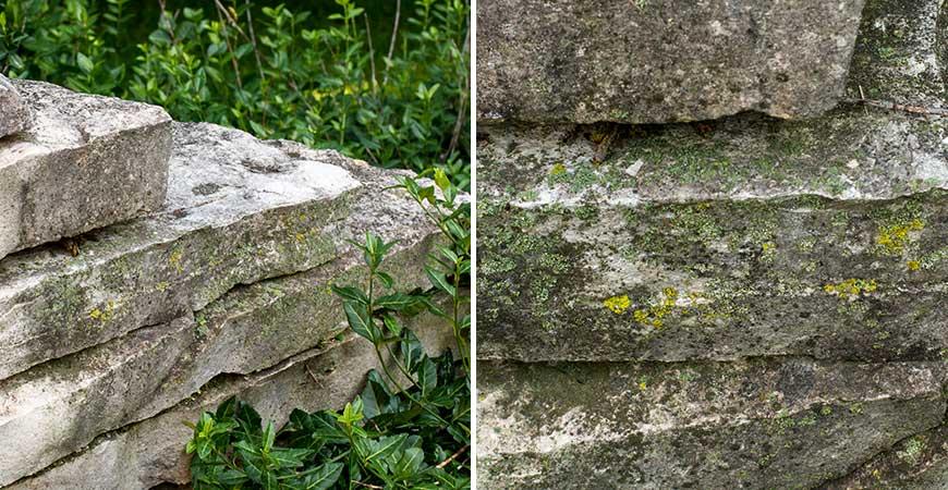 lichen on stone