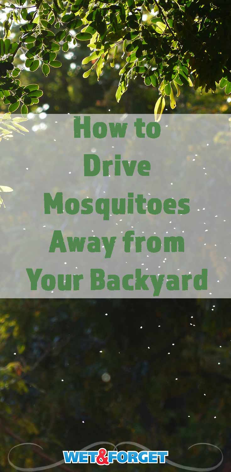 Mosquitoes can seem impossible to get rid of in the summer months. These tips will help you get to the root of your mosquito problem so they won't return to your backyard!