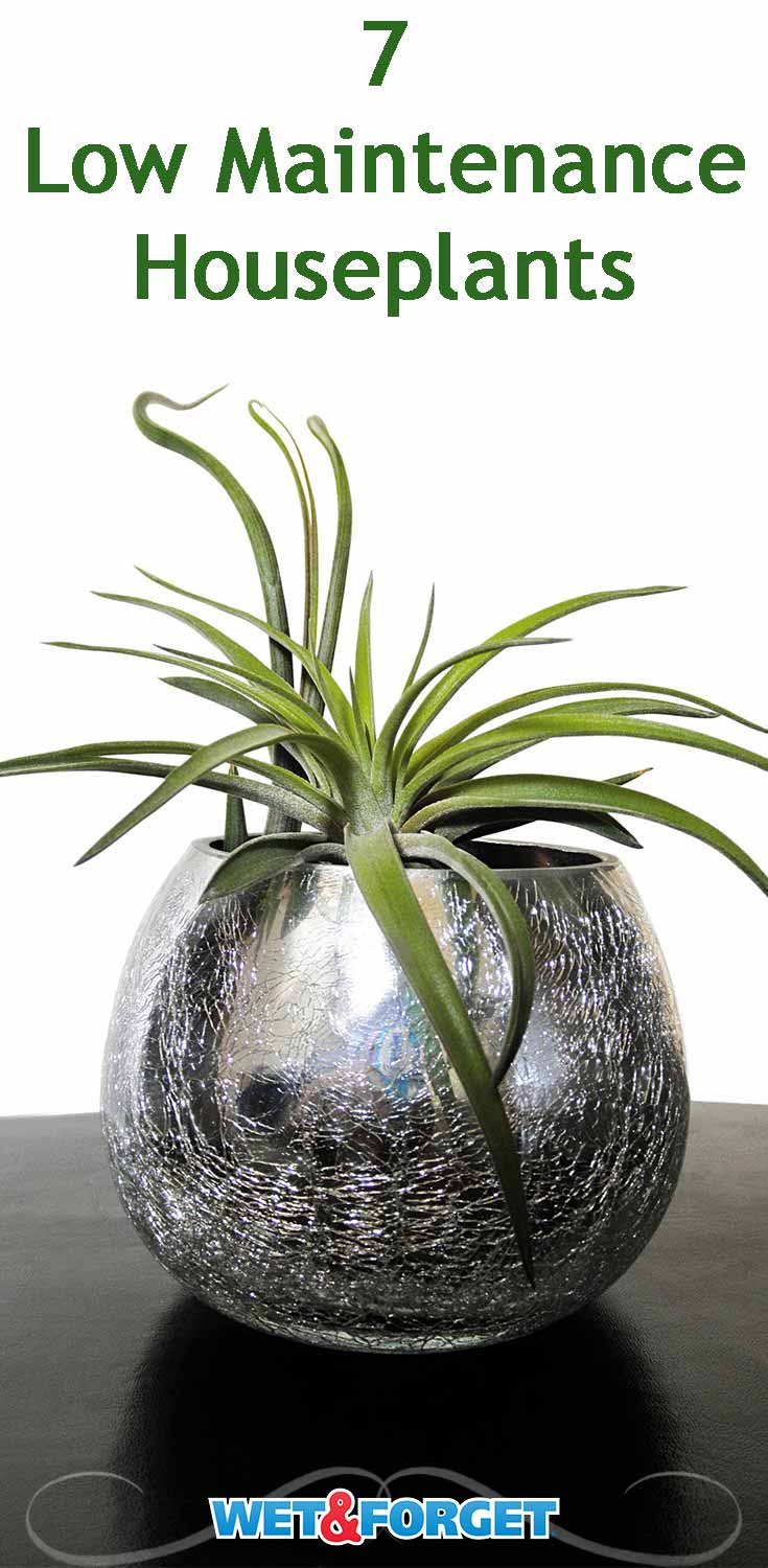 Not sure what houseplant to start out with? Check out these 7 low maintenance houseplants!