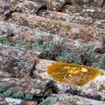 How to Remove Lichen From Roof Tiles and Outdoor Surfaces