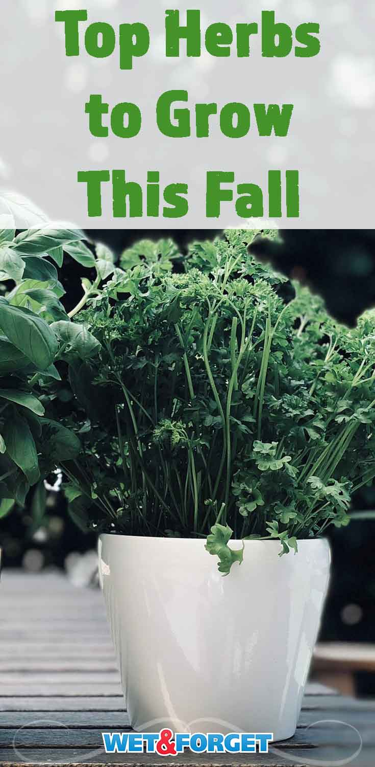Many herbs thrive in the fall weather! Use our guide to find the best herbs to grow this season.