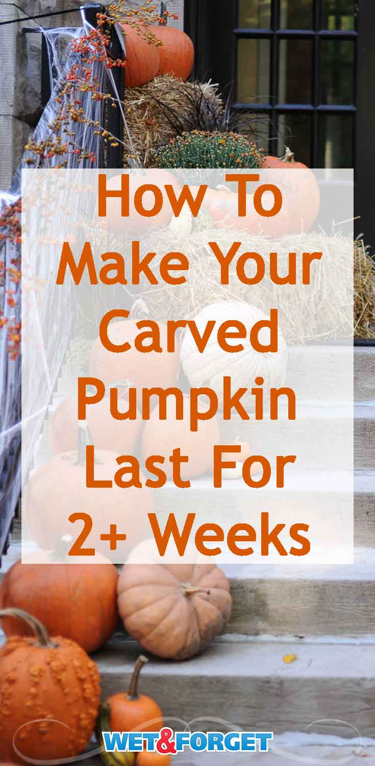 Your jack-o'-lantern is sure to last over two weeks with this easy pumpkin preservation method!