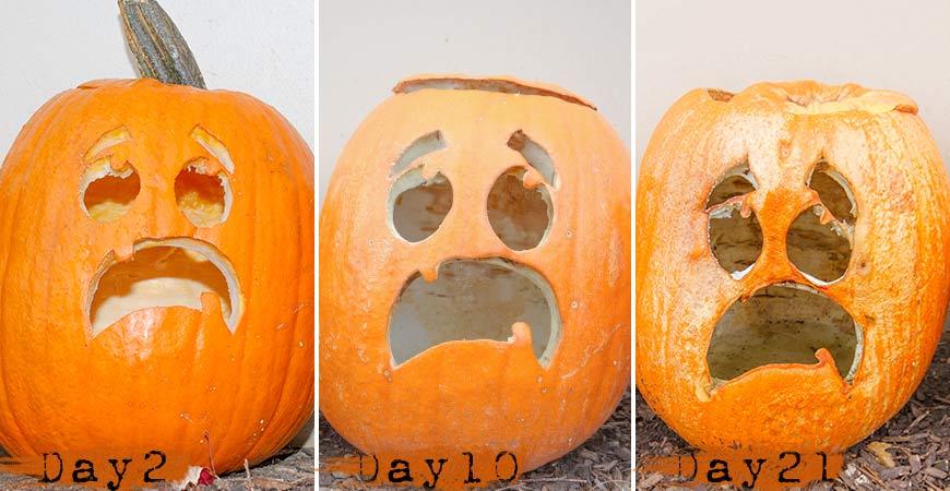 best-pumpkin