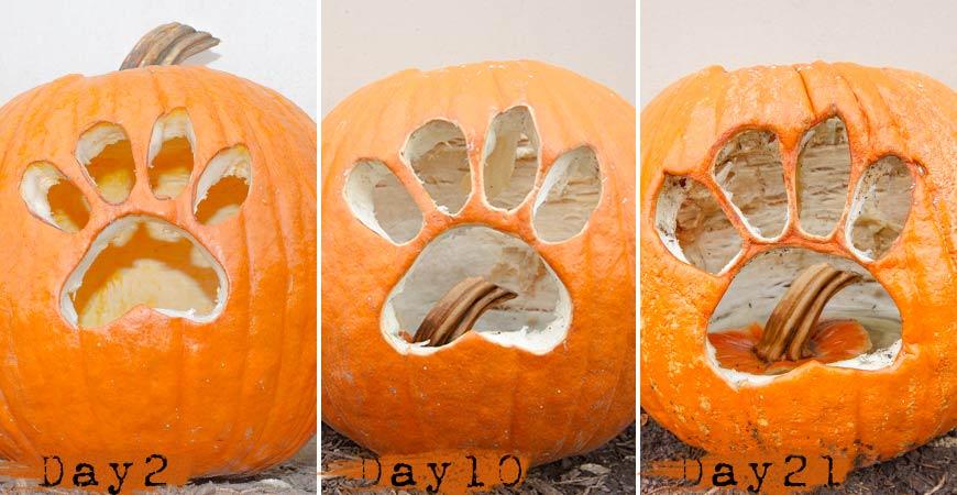 awesome-pumpkin