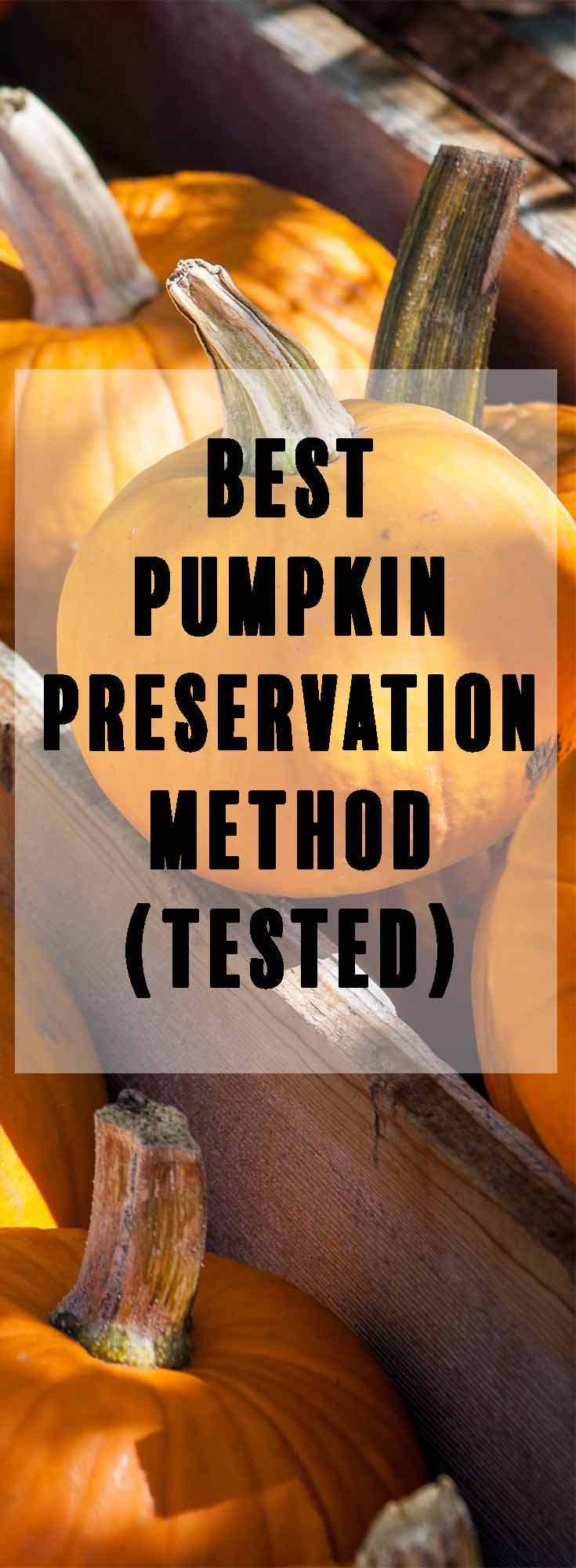 Mold and mildew can cause a pumpkin to rot too quickly. Use this 1 step trick to keep your pumpkin looking good for up to a month!