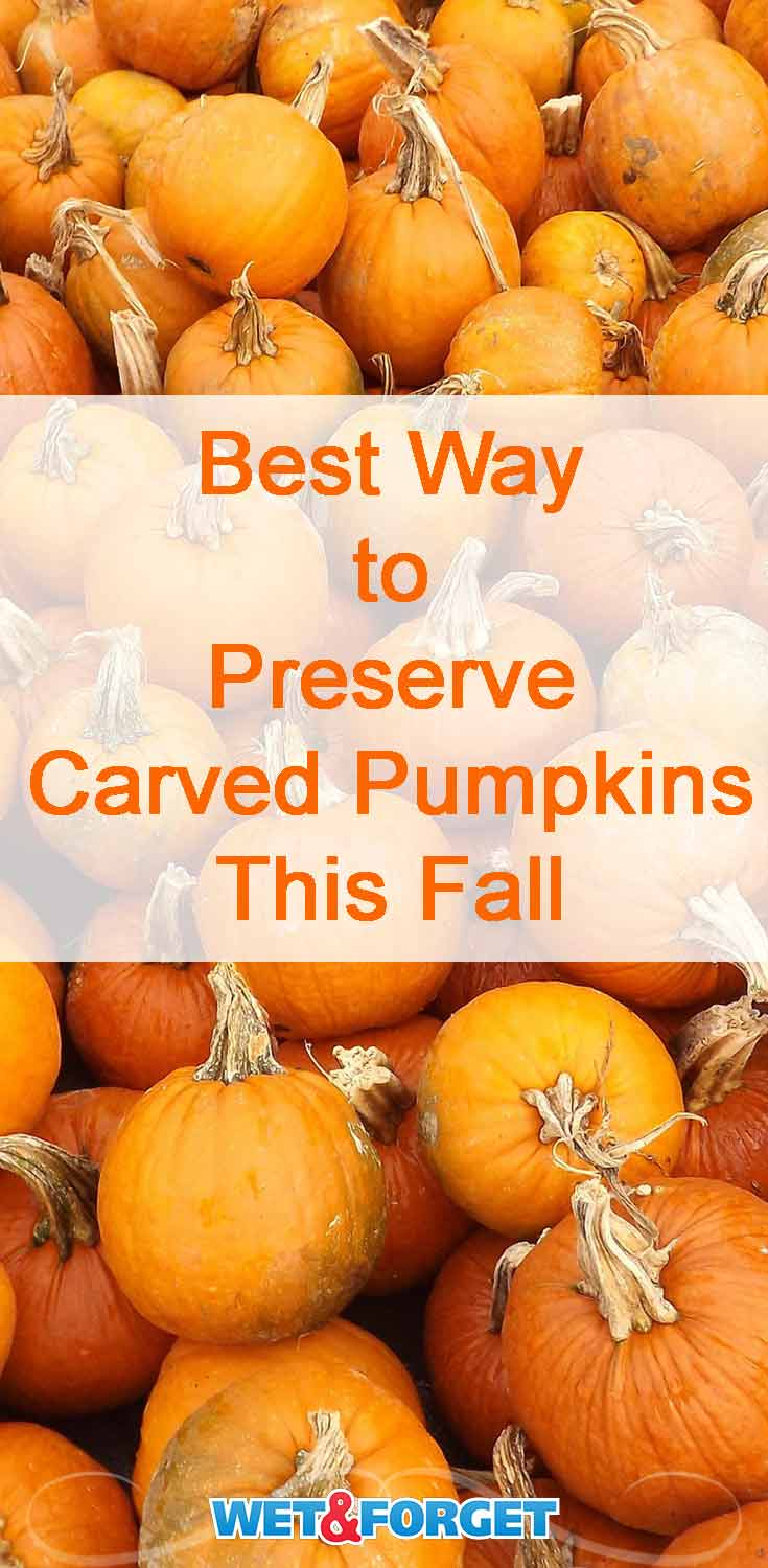 Make sure your jack-o'-lanterns last for a multiple weeks with this pumpkin preservation method!