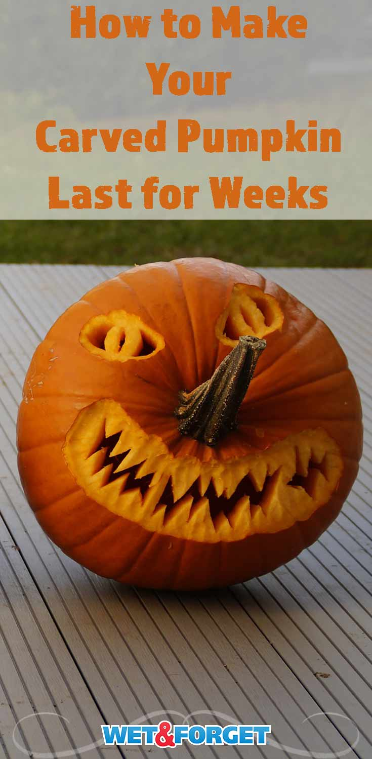 Don't let your carved pumpkin rot away in a few days! Keep your jack-o'-lantern for a few weeks with this preservation method!
