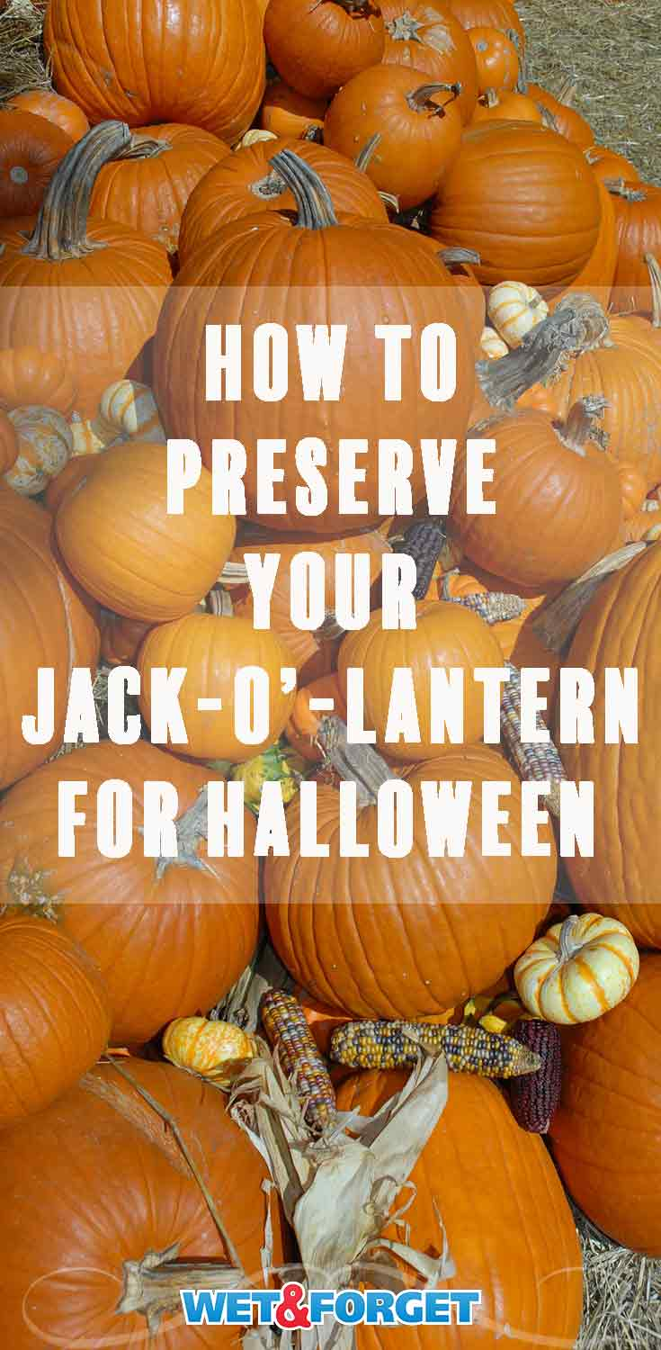 Keep your jack-o'-lantern past Halloween with this simple preservation method!