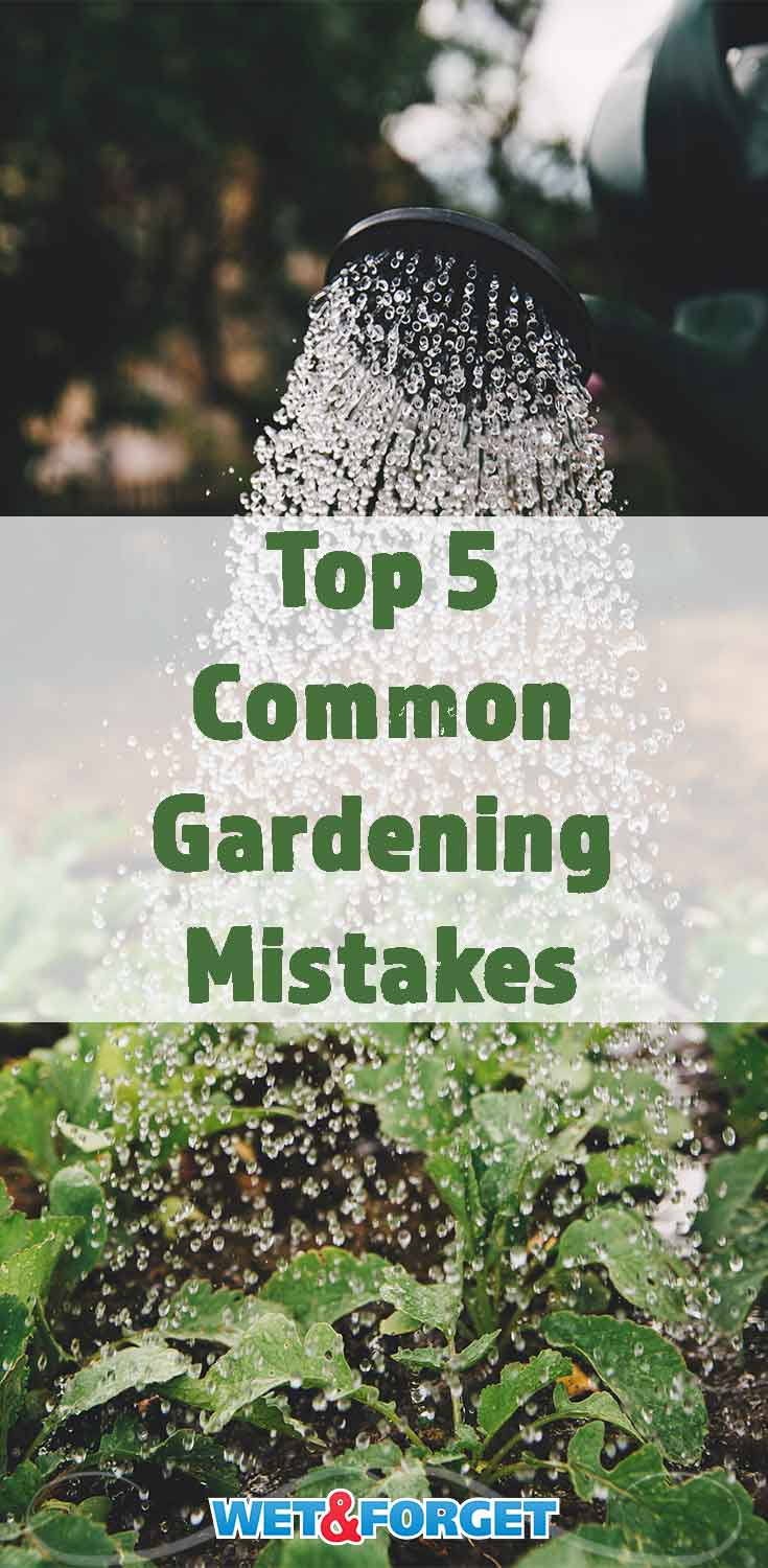 Avoid these common gardening mistakes to have healthy and strong plants in your garden!